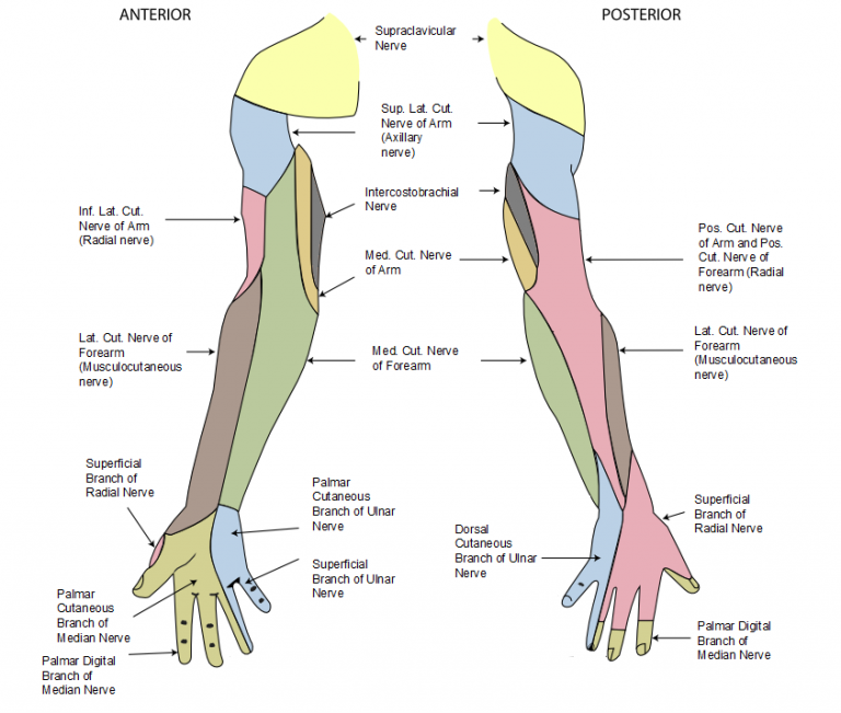 CHAPTER 3 ORTHOPEDIC AND NEUROLOGIC PROCEDURES IN