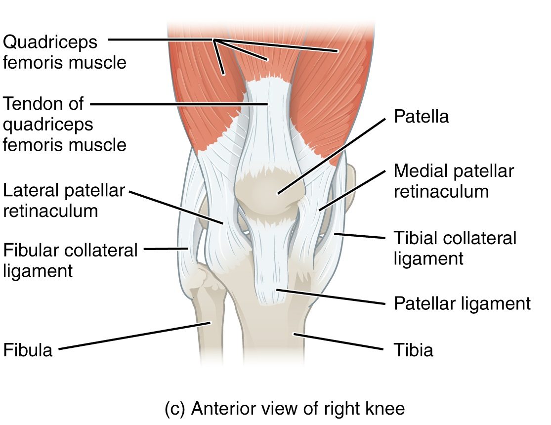 Patella Frcem Success