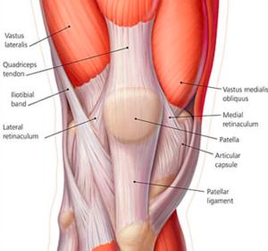 Quadriceps-Tendon-Anatomy-300x280