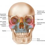 Skull-Map-768x639