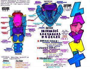 Larynx-1024x785